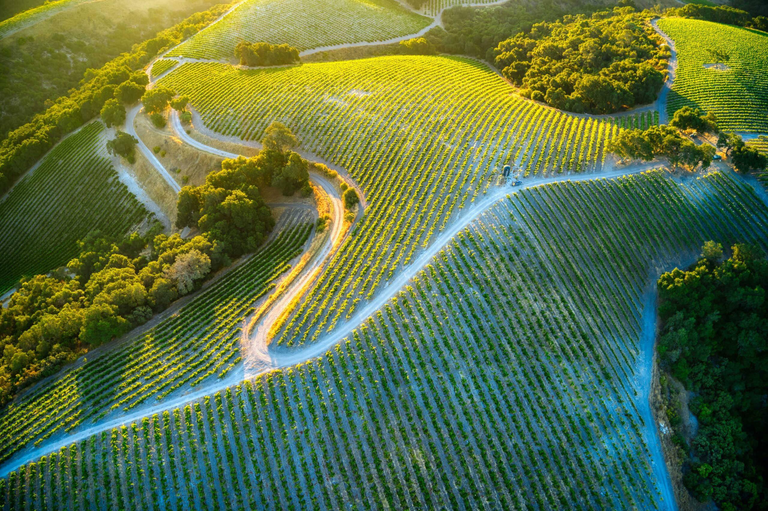 The IoT at the service of the wine sector